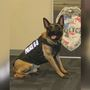Law enforcement agencies are asking for help to win grant for K-9 unit