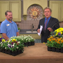 In The Garden: Dividing perennials to prepare for fall