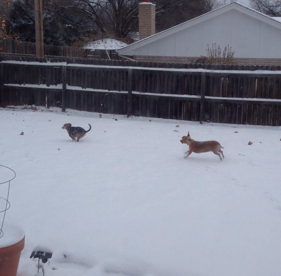 My dogs enjoying the snow in Stillwater