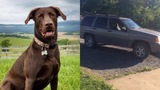 Dog dropped off after police say thief stole a Jeep
