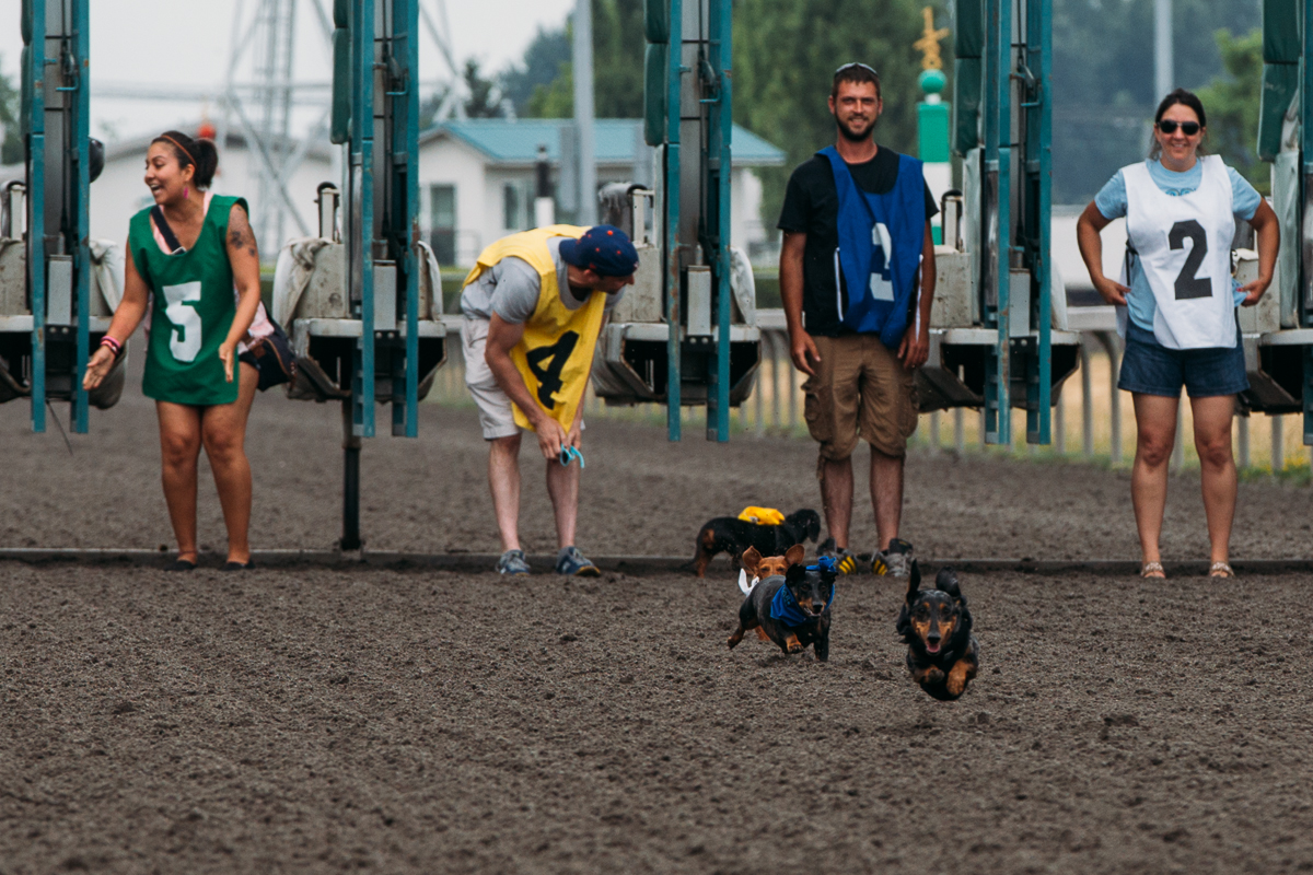 24 wiener dogs took the track at Emerald Downs for the 19th Annual STAR 101.5 Kent and Alan Wiener Dog Races. In front of hundreds of people, wiener dogs sprinted out of the gate and towards their owners at the finish line. In the end, the winner was Otto and his owners Roy and Kathy Edick. July 13th 2014. (Joshua Lewis / Seattle Refined)