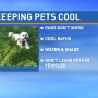 Pet safety is crucial in high temperatures