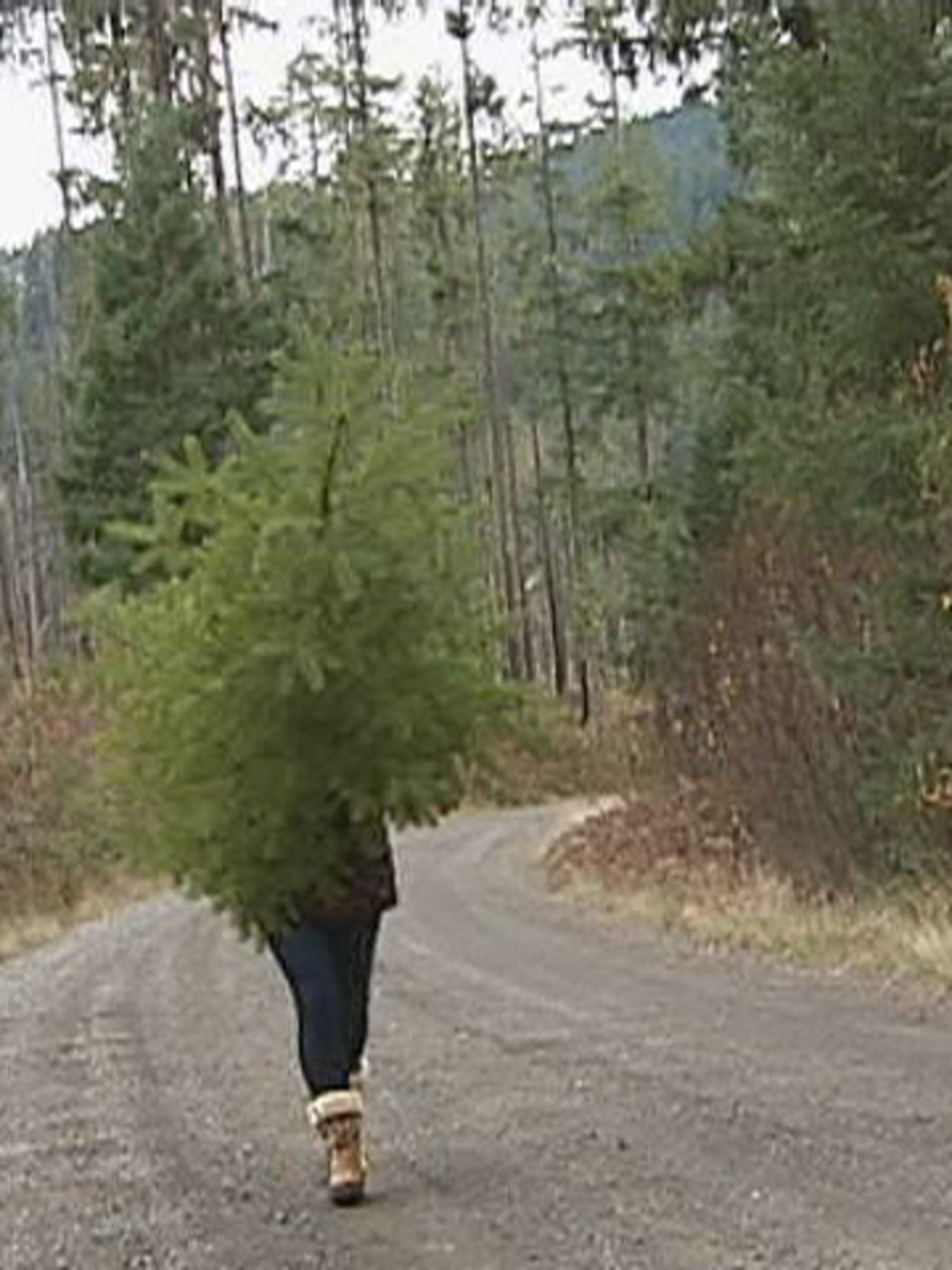 Need a Christmas tree? Permits $5 on
