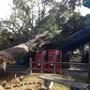 Slide with summer memories destroyed by fallen tree