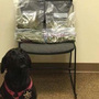 Elmore County Sheriff K9 helps sniff out marijuana during traffic stop