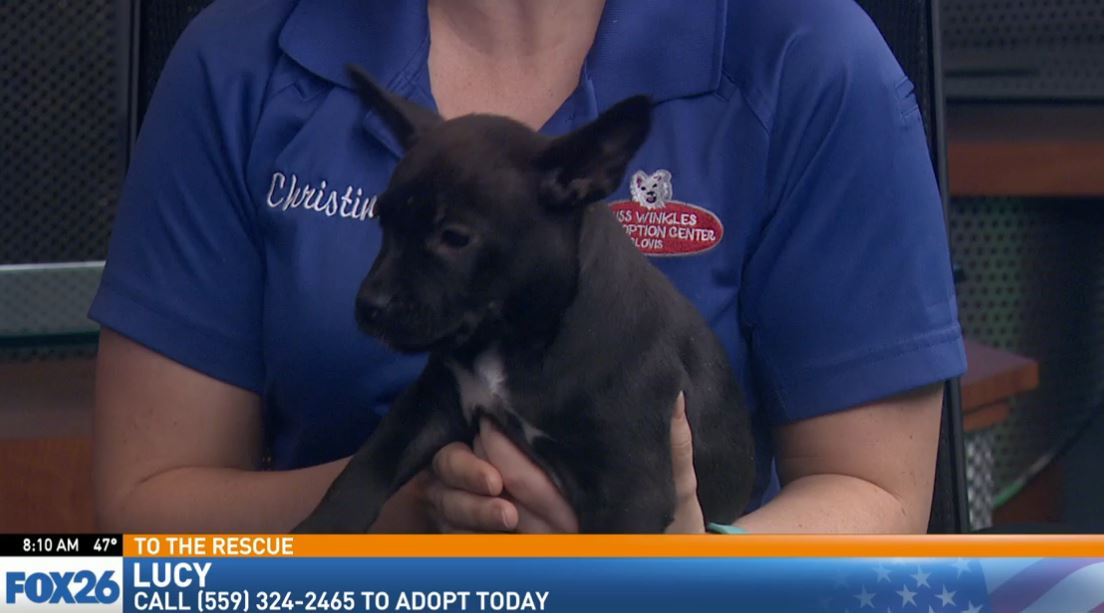 Christina Stainbrook from Miss Winkles Pet Adoption Center visited Great Day with a puppy looking for a good home.