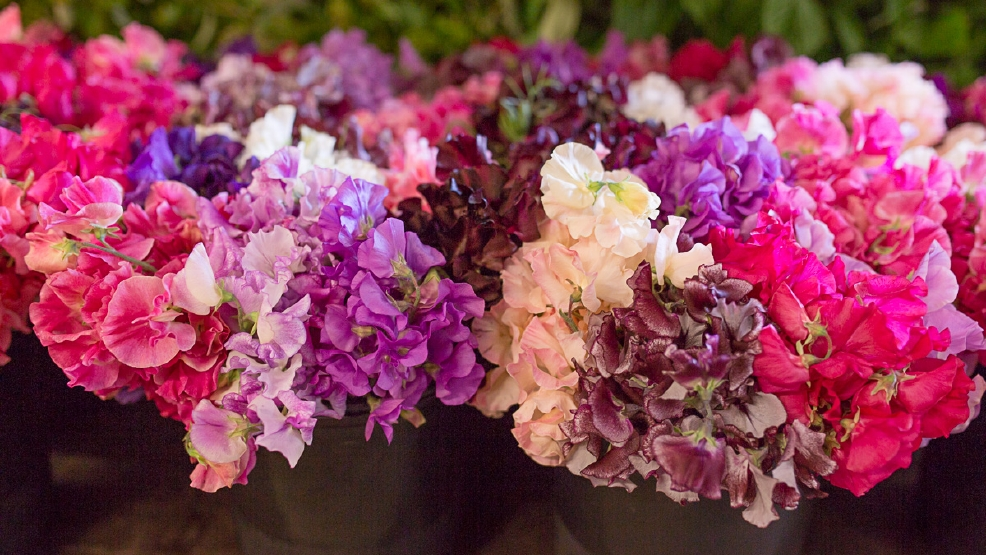 flower-market-paola-thomas-food-photography.jpg