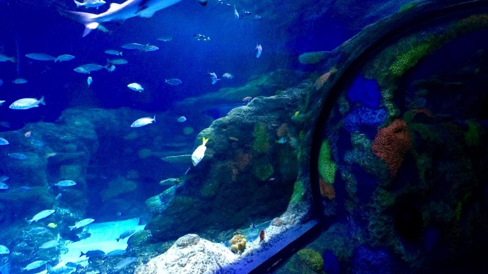 Aquarium careers