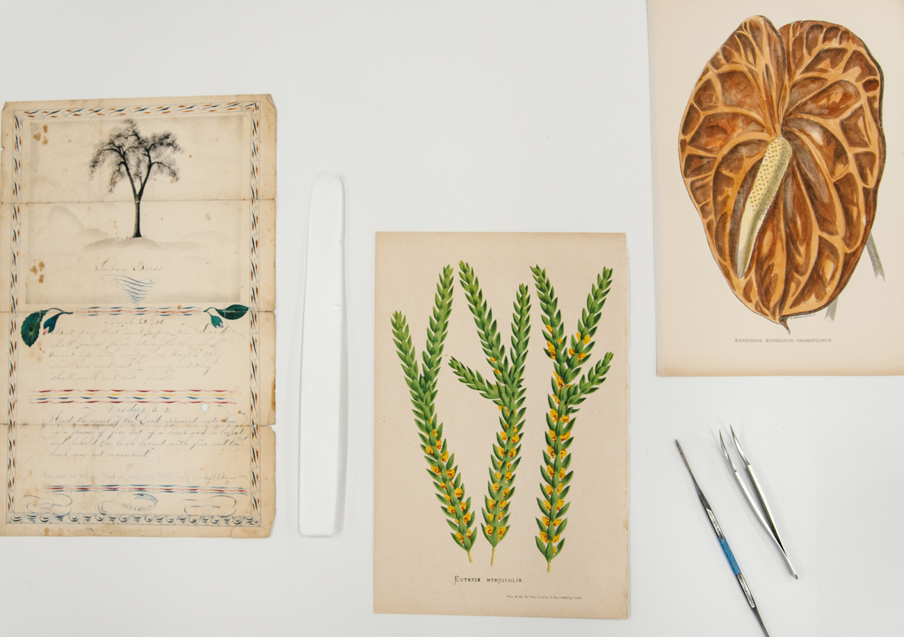 A collection of conservation works in progress including a personal letter dated in 1844 from a Shaker Village resident in Ohio and two botanical illustrations / Image: Melissa Sliney{ }// Published: 9.7.19