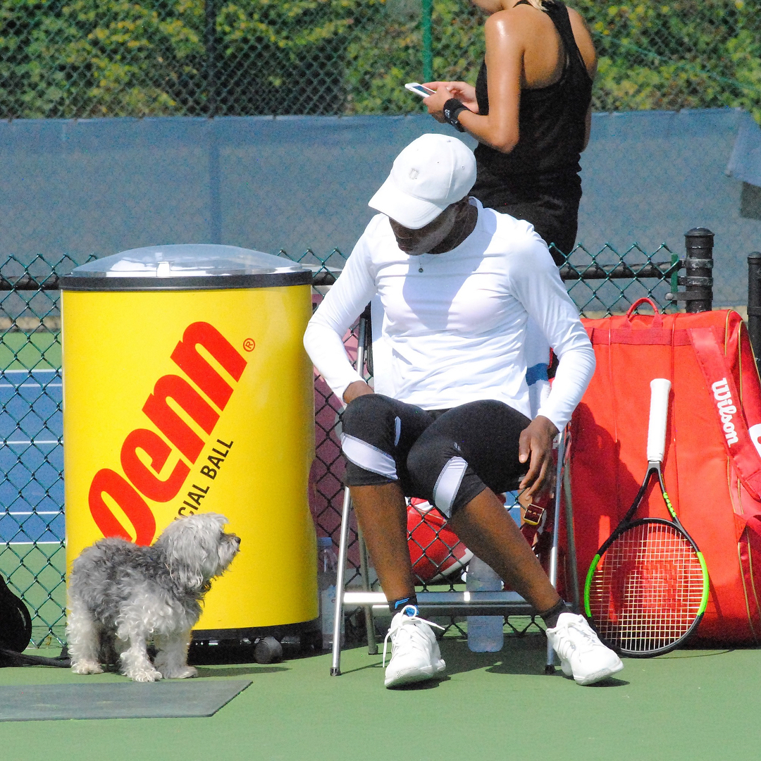 POST: Tennis ball heaven. @venuswilliams brought a doggone cute partner to practice with today!  / IMAGE: IG user @midwestsports // Published: 8.17.17