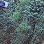 Buy a Christmas tree to help children in need