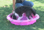 PETS AND HEAT_0006_frame_134.jpg