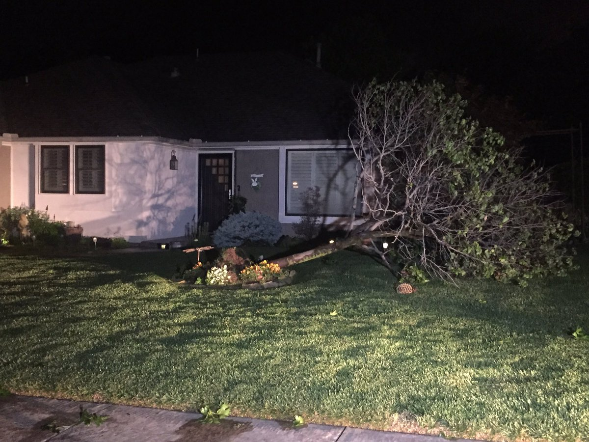 Tree uprooted in front of a Norman home just south of Highway 9. (Kyle Hoelting  / KOKH)