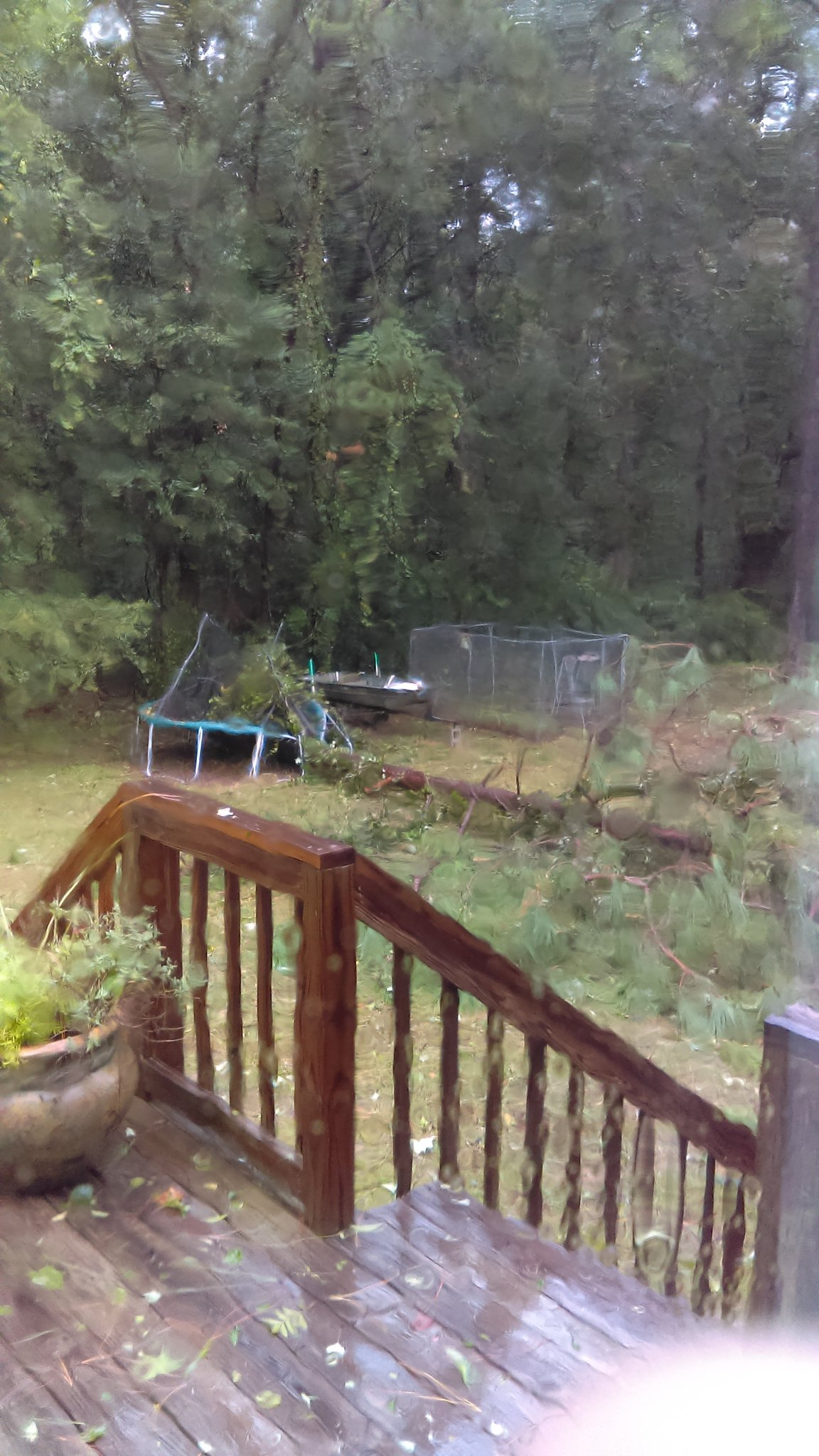 Trees down off Firetower Lane in Sylvester. / Photo: Dalton Keene