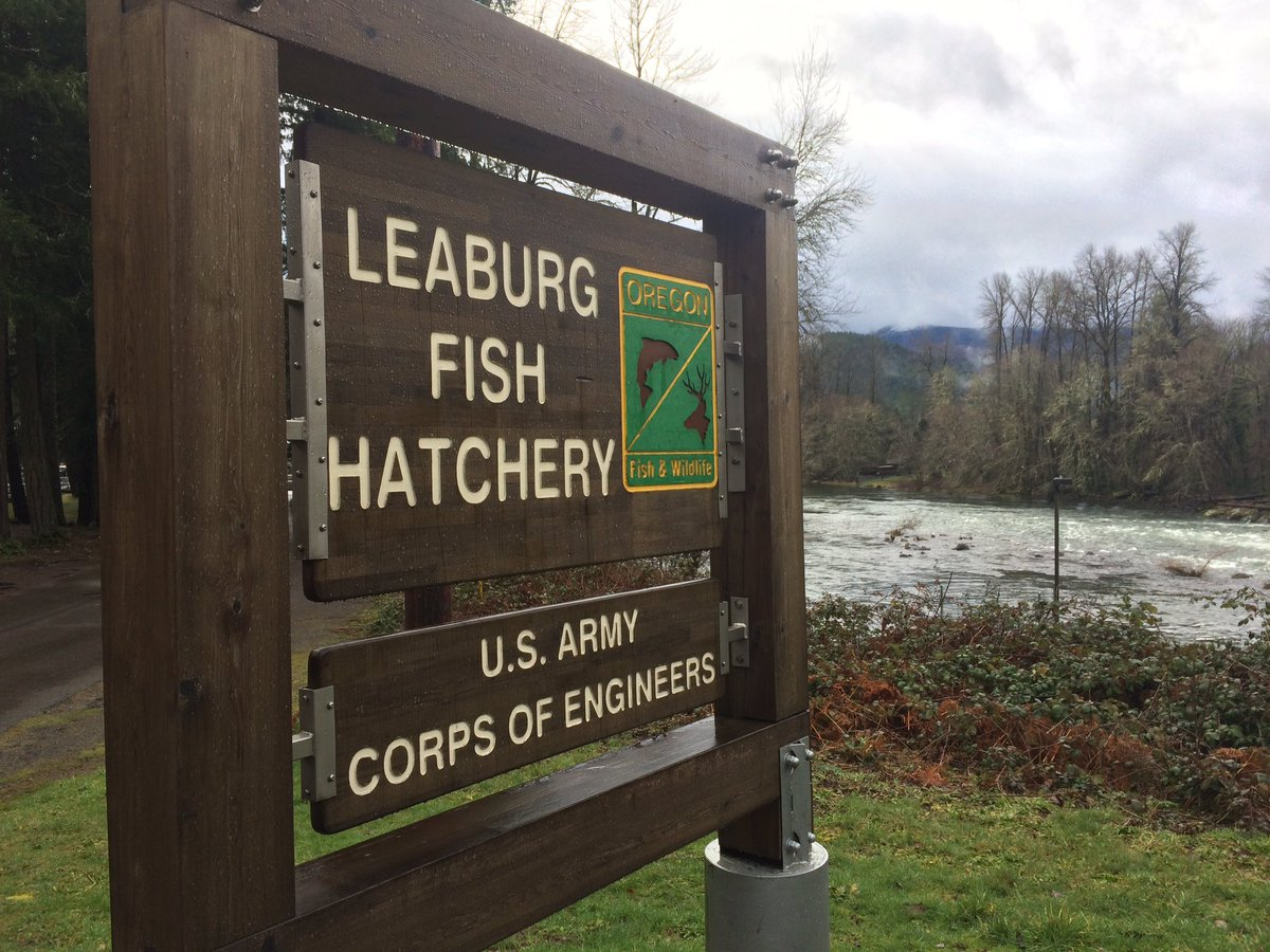 The Leaburg Fish Hatchery was build in 1953. Photo by Ellen Meny.