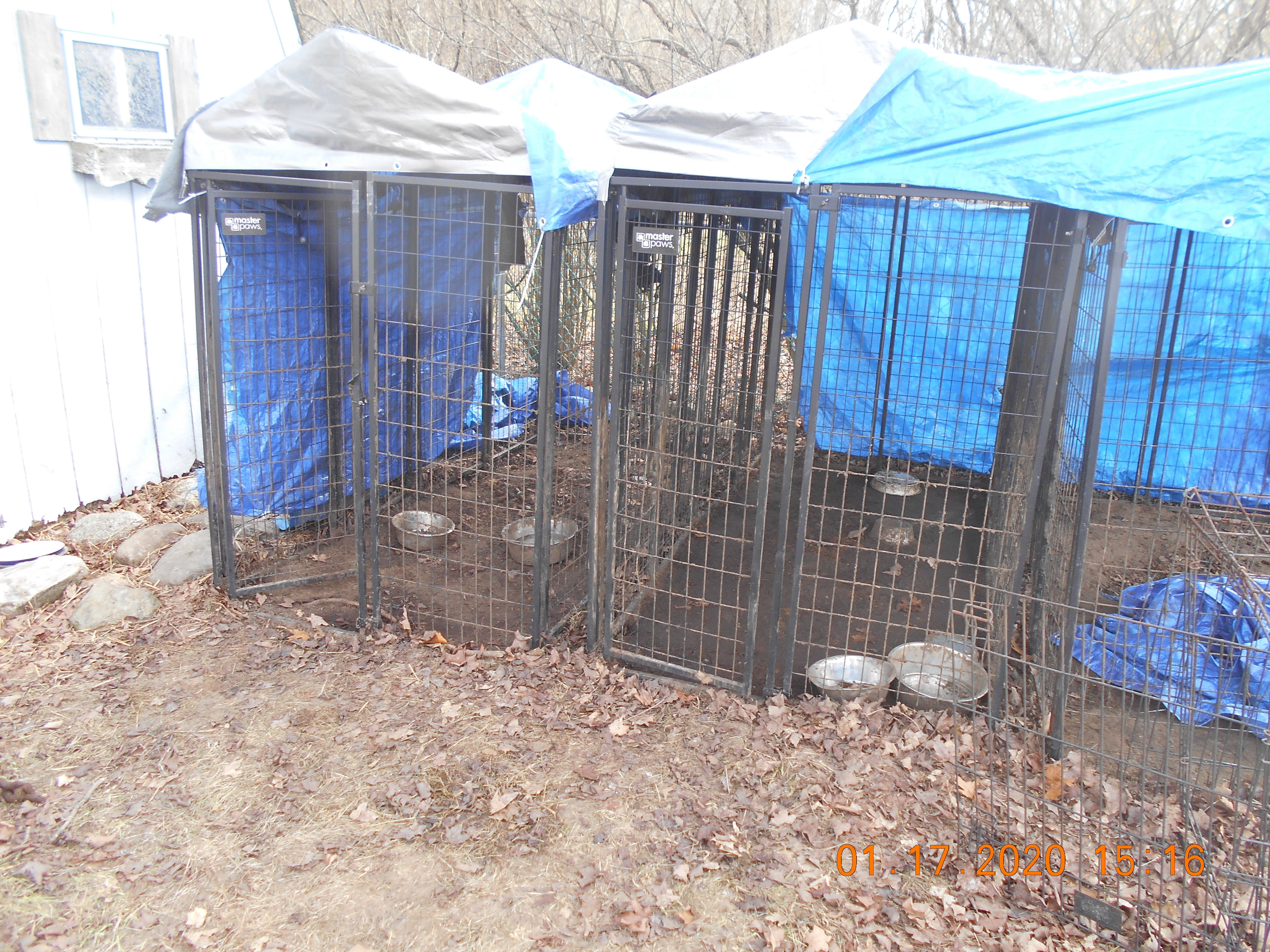 SPCA Executive Director Katie Timber said the dogs were left outside in the cold with no food or water for hours on end. (WWMT/ Courtesy of SPCA Southwest Michigan)