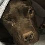 Dog recovering after crushed by trash truck
