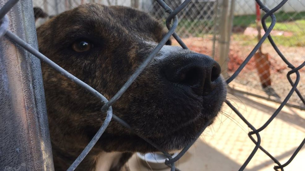 Sheriff Commits Drug Money Inmate Work In Expansion Of Butts Co Animal Shelter Wgxa