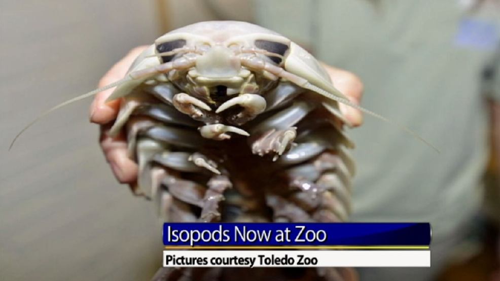 toledo zoo welcomes creepy creatures to the aquarium wnwo