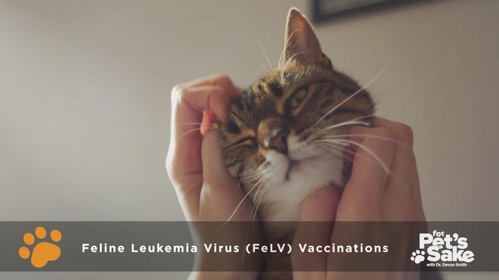 For Pet's Sake: Feline Leukemia Virus | WSYX