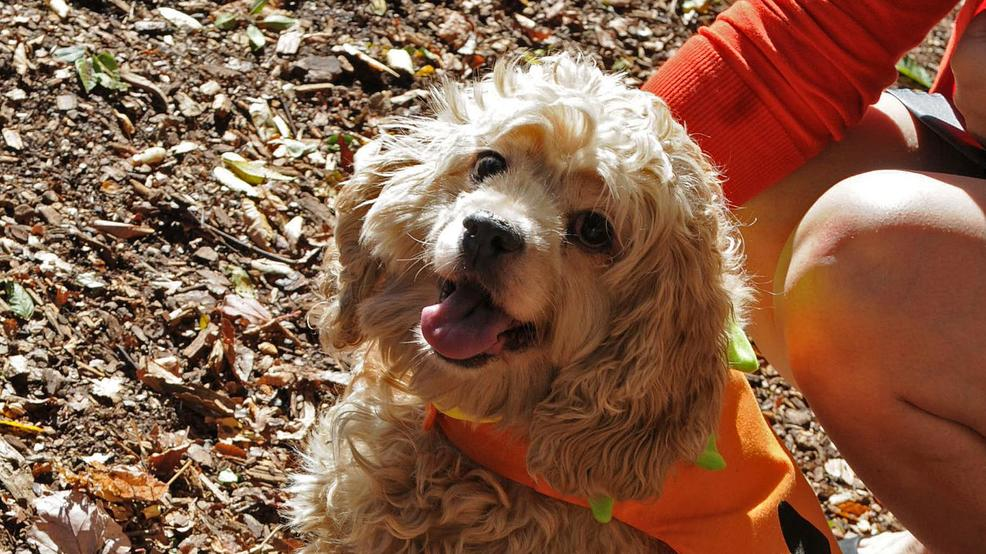 Human Rescue Alliance Dc Dogs