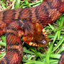 Snake sightings on the rise due to warm weather