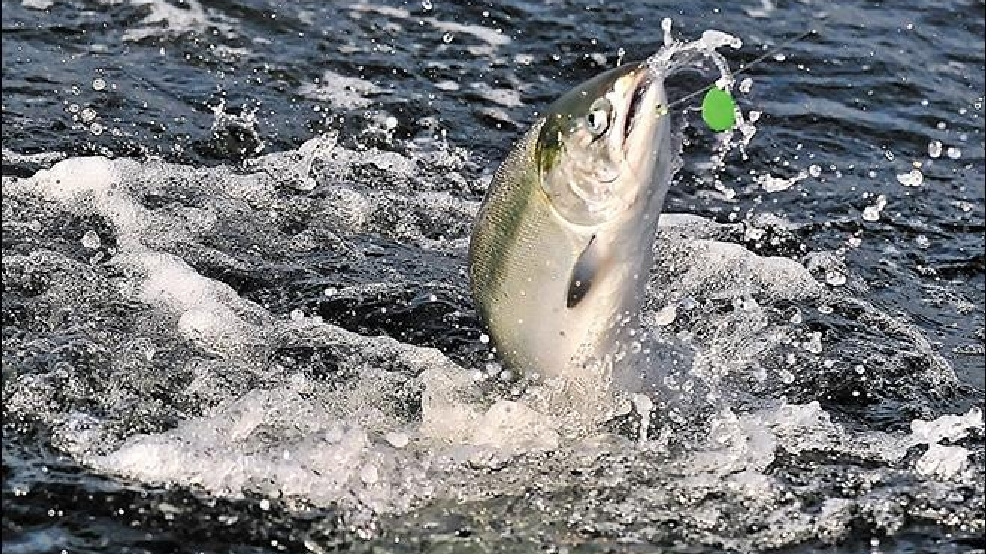 Salmon fishing off s oregon coast looks good for 2015 katu for Salmon fishing season oregon