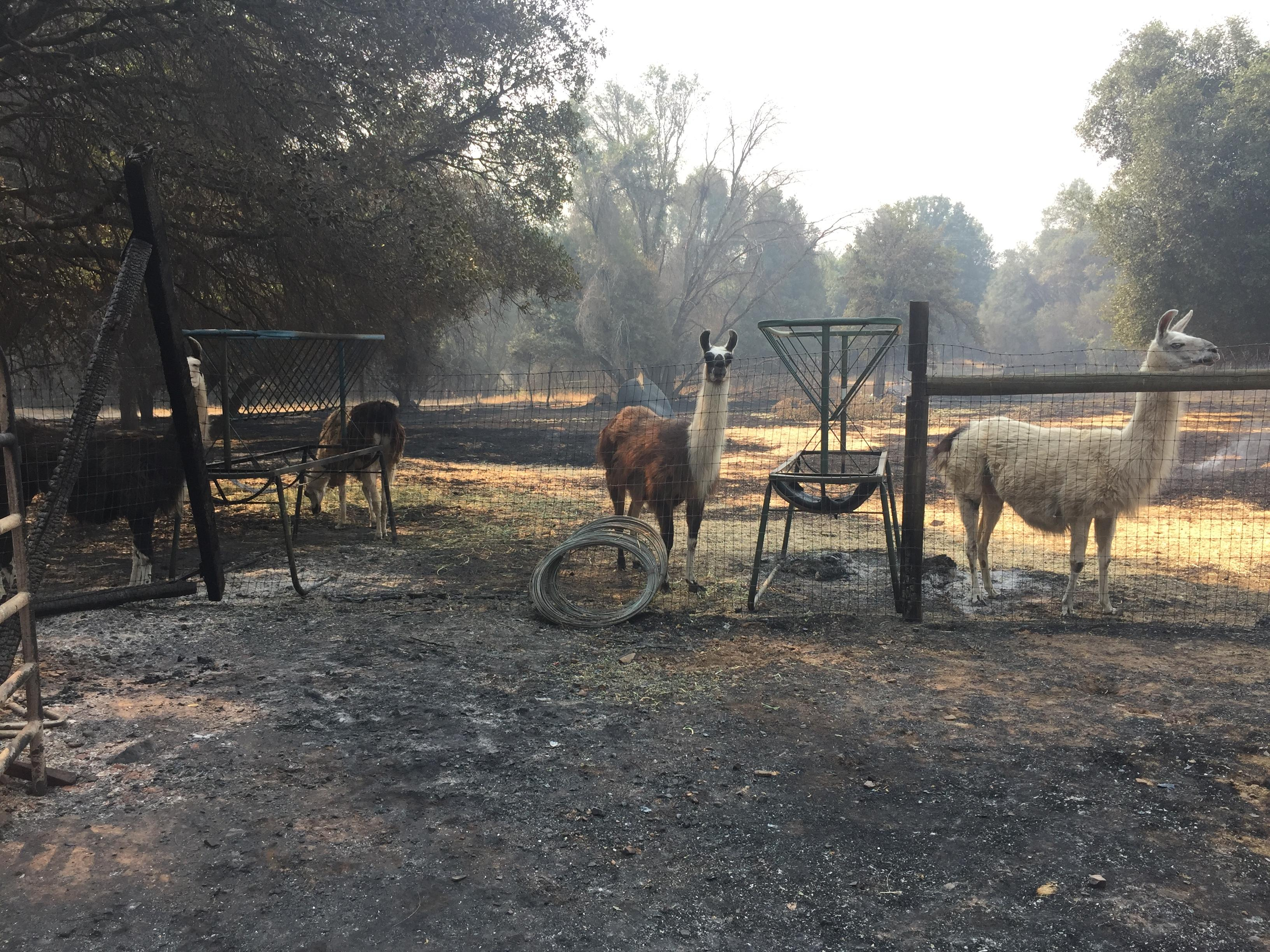 Animals spared by the fire (Photo Wendi Lane)