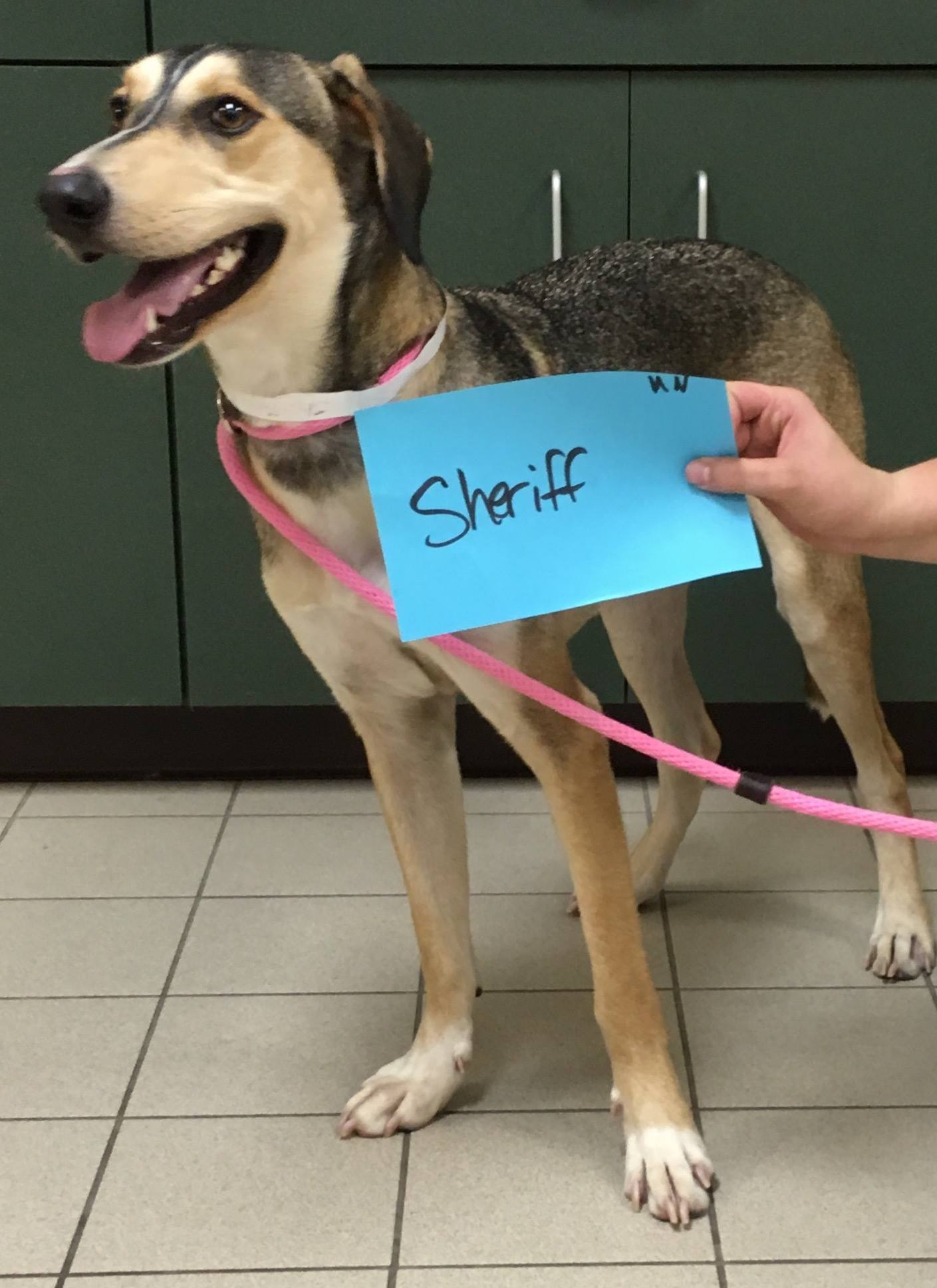 Sheriff is available to meet you at the Cherryland Humane Society.