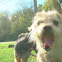 Two dogs saved after being found inside a zipped bag on the side of Clermont County road