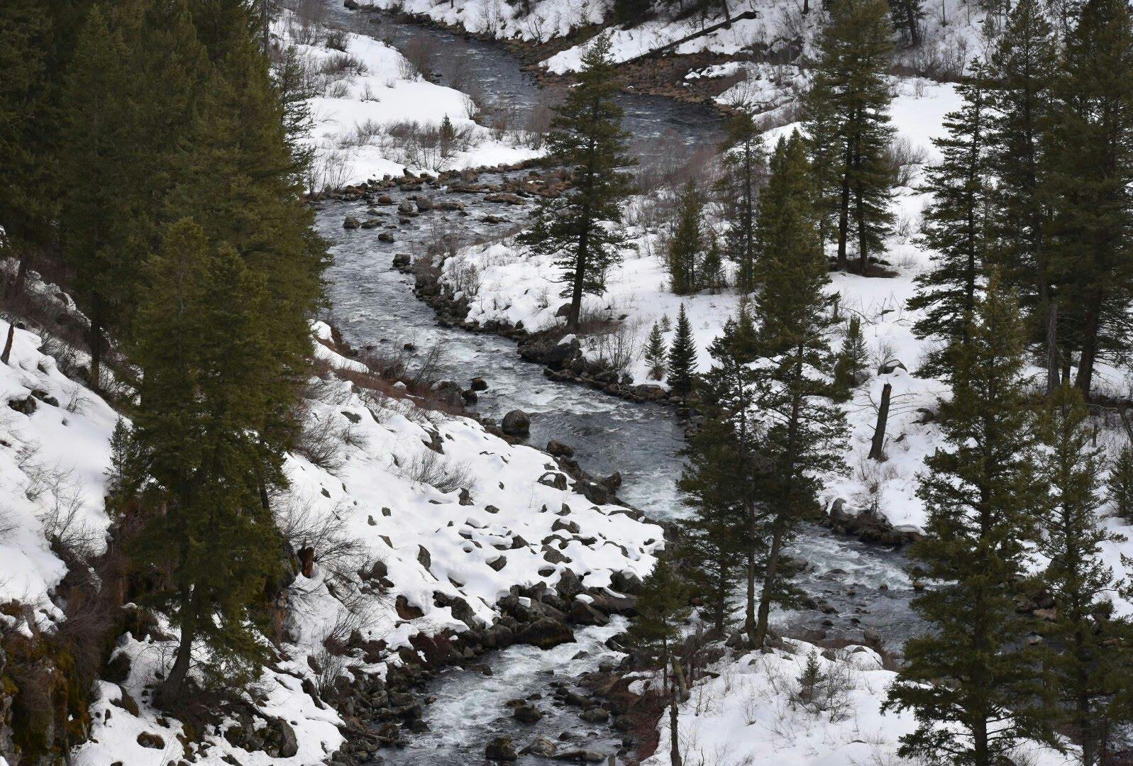 "Rocky Hatridge, Grade 6 Honorable Mention, Home School: ""The Warm River, flowing from the Targhee Caribou National Forest, can hold many surprises. Look to the last bend of the river to see one of the forests larger residents."""