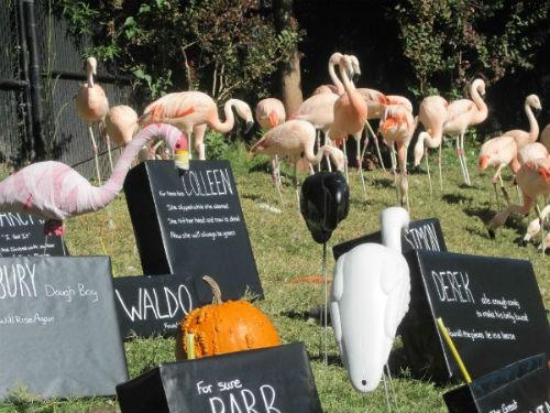 Even the flamingos got in on the action.