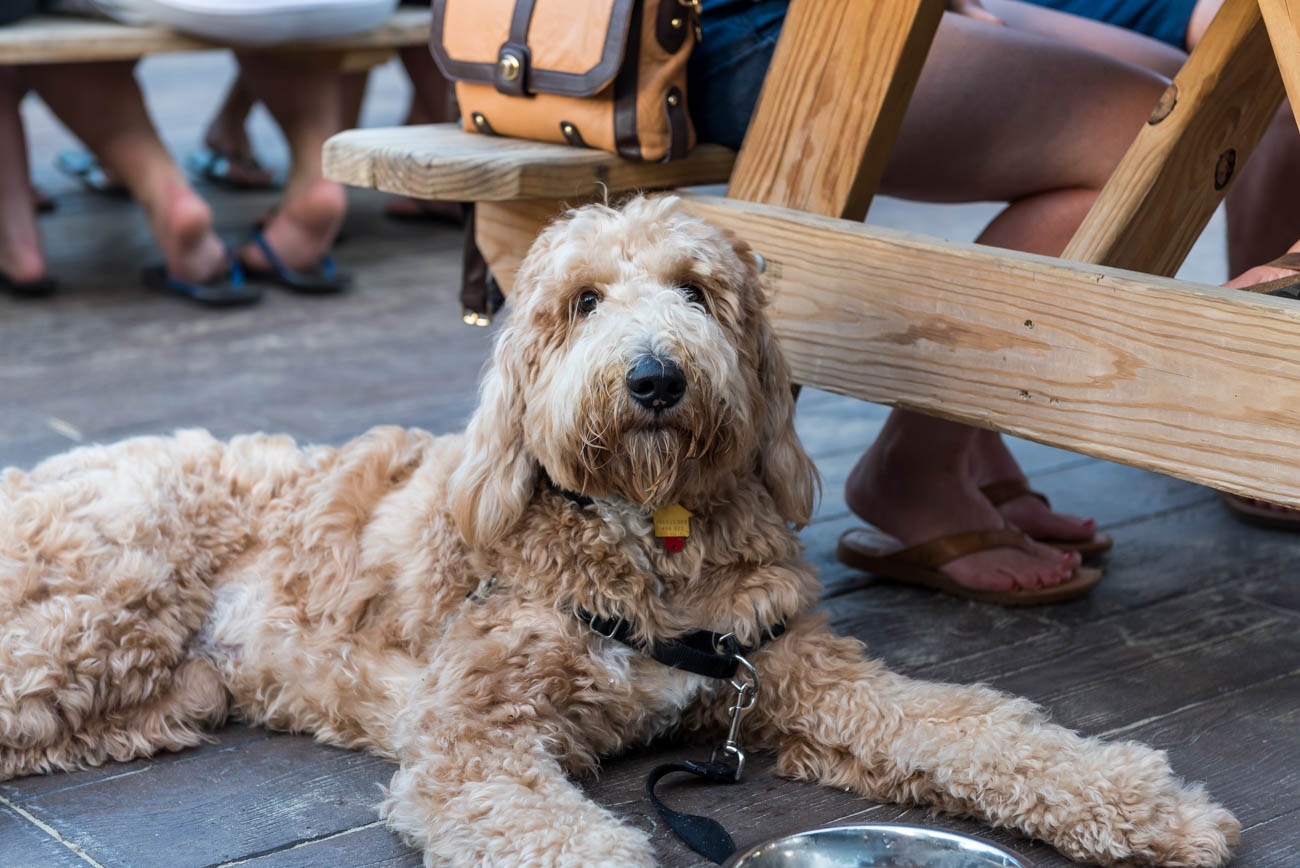 Fifty West Production Works is pup-friendly, too. / Image: Mike Menke // Published: 7.6.18