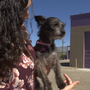 Canutillo dog owner upset at animal shelter's protocol after dog rescue