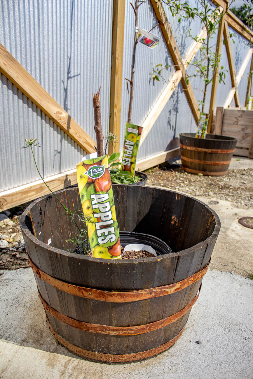 Apple trees in the works on the patio / Image: Katie Robinson, Cincinnati Refined // Published: 7.22.19