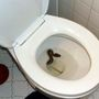 Snake fished out of toilet in Virginia, claimed by owners miles away