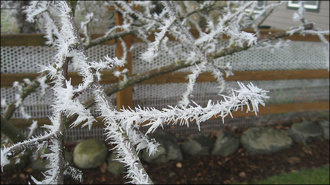 Hoar Frost (Photo: Sue Linder, Enumclaw)