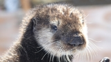 Sea Otter Awareness Day: Oregon Coast Aquarium in Newport holds special event Saturday