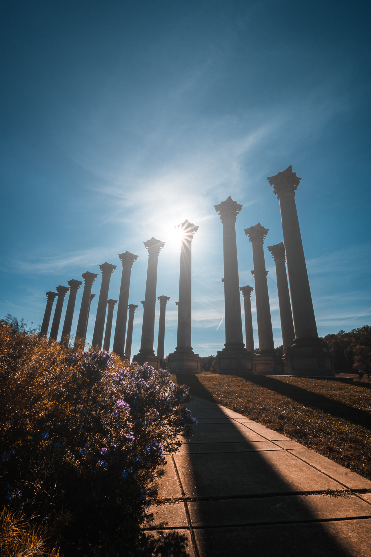 Basking in It – The old capitol columns basking in sunlight at the National Arboretum{&amp;nbsp;}(Image: Zack Lewkowicz)<p></p>
