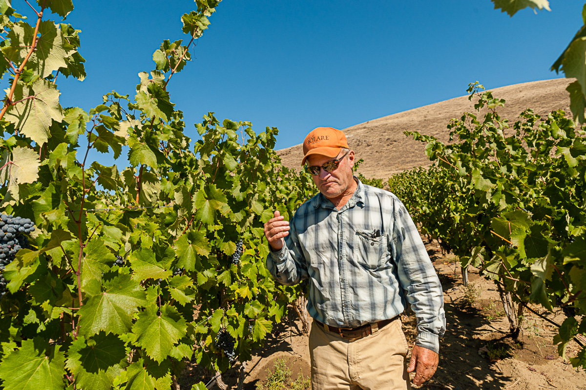 Dick Bouchey tastes Syrah grapes from the Force Majeure estate vineyard. (Image: Courtesy Richard Duval)