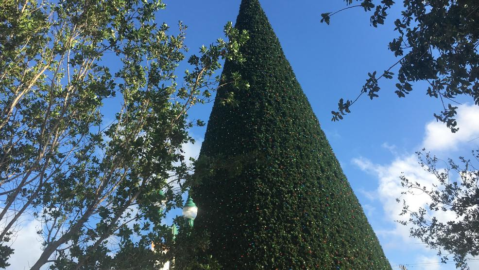 cost of delray beachs christmas tree raises eyebrows - Cost Of Christmas Tree