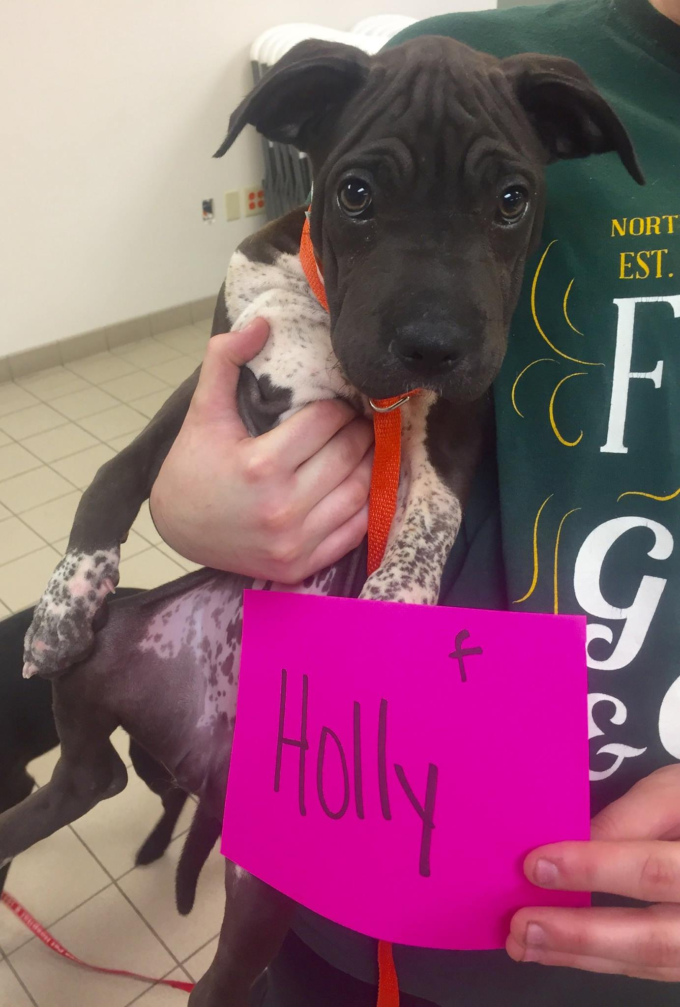 Holly is available to meet you at the Cherryland Humane Society.