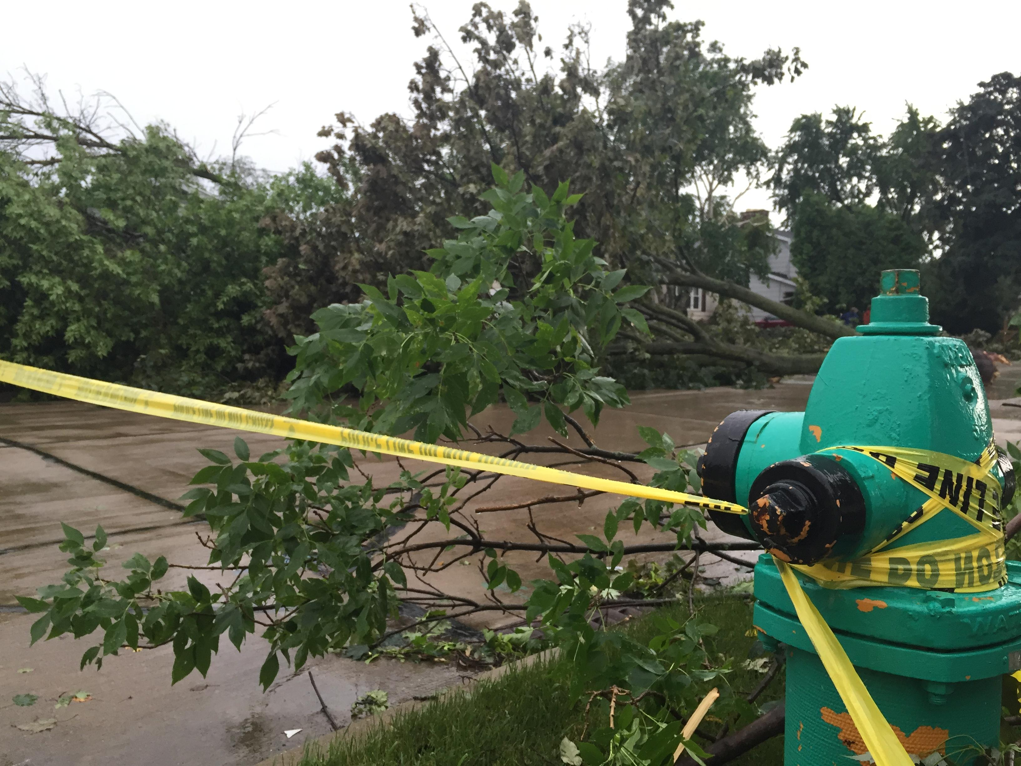 Trees fell over Matthias Court near College Avenue in Appleton, June 14, 2017. (WLUK/Alex Ronallo)