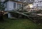 Tree on house in South Portland - ?Laura Galt?.jpg