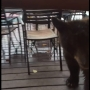 'Oh, he's so cute!' Video shows baby bear sniff out Leavenworth burger joint