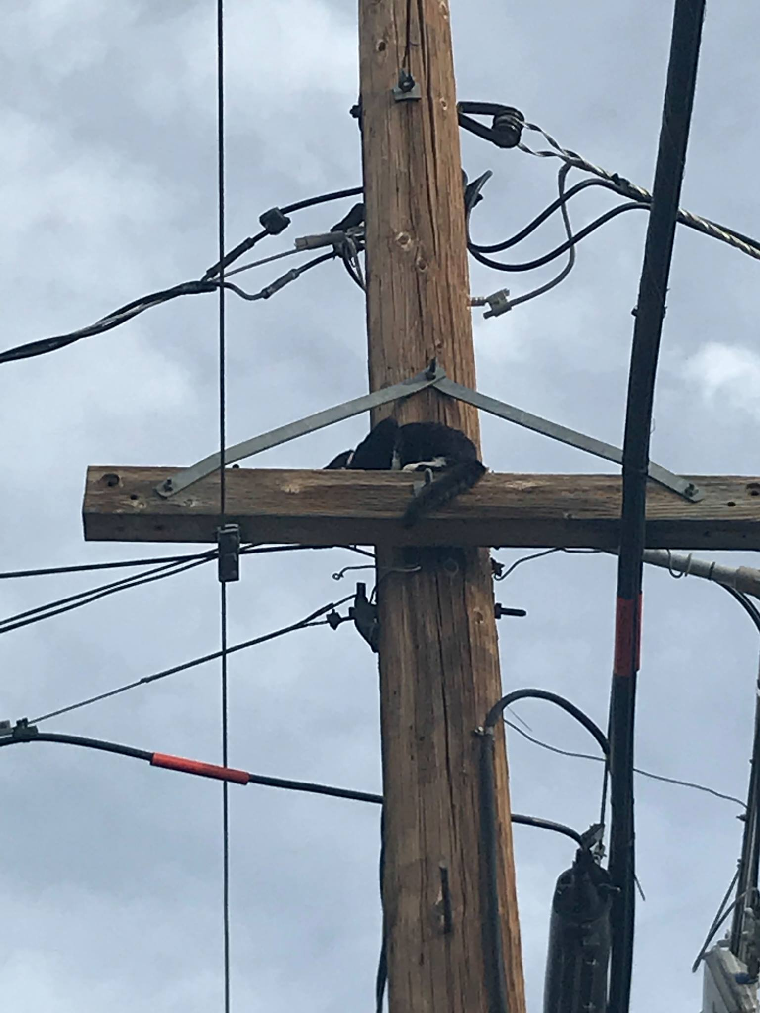 Cat stuck on power pole leaps to safety with help of Carson City Fire (Courtesy: Carson City Fire)<p></p>