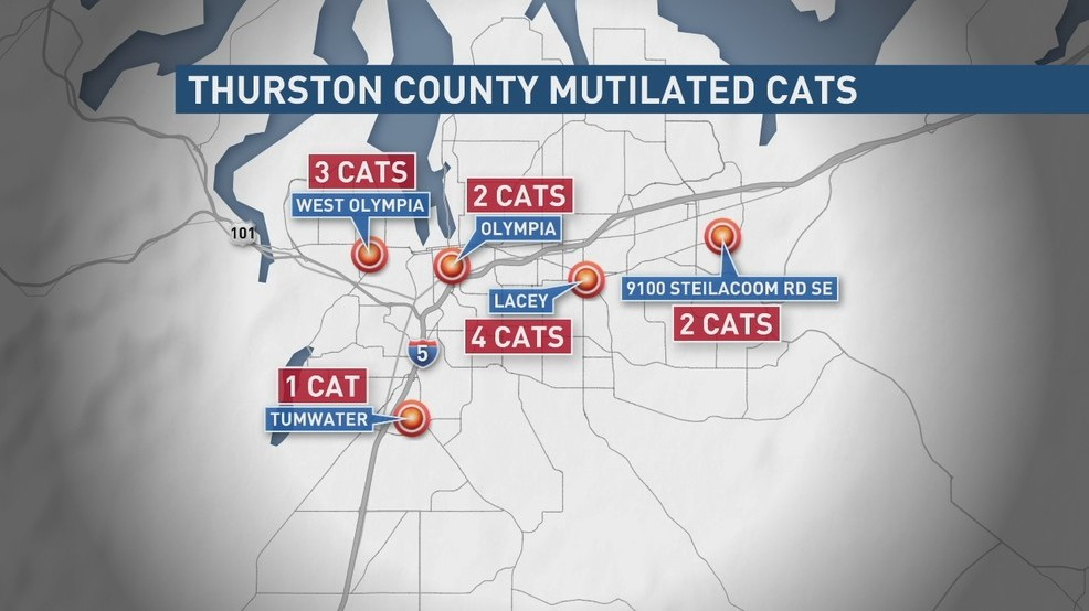 12th mutilated cat discovered near Lacey, reward jumps to $36,000