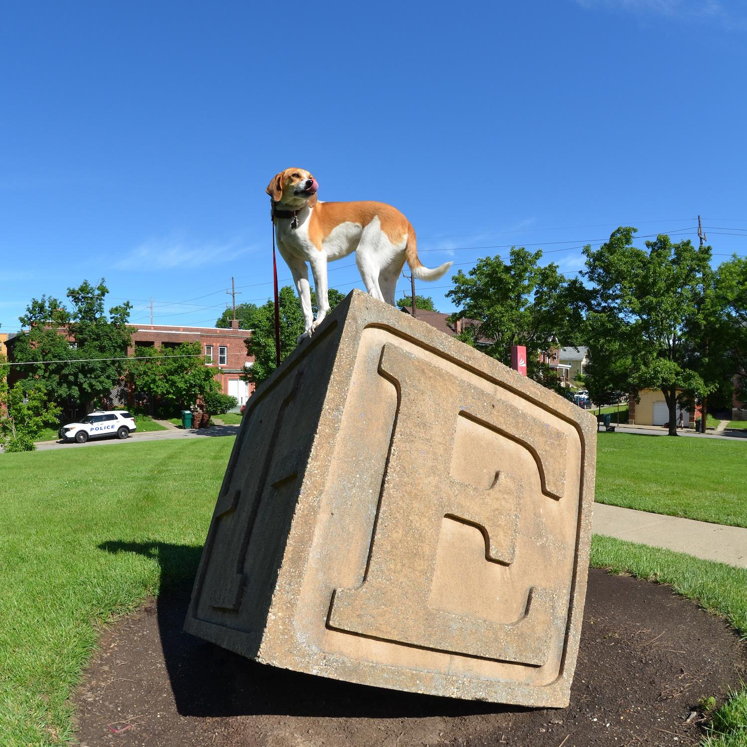 LOCATION: Price Hill Library / Mollie is a local Instagram celebrity. Famous for posing on fire hydrants in front of ArtWorks murals (and other Cincy landmarks), this hound dog has officially stolen our hearts. You can follow her adventures on Instagram @molliethehounddoggie / Image: Patti Mossey (Mollie's owner and #1 fan) // Published: 5.1.18