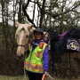 The 10,000-mile horseback ride: A journey to raise awareness for domestic violence