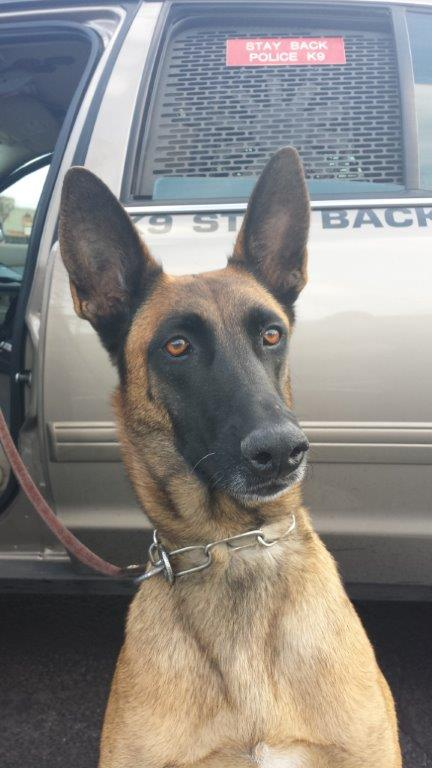 "APD K-9 Emma alerted officers to the presence of narcotics, after which they found approximately 75 pounds of meth hidden inside large ""Purple Power"" degreaser jugs. (Photo courtesy: Austin Police Department)"